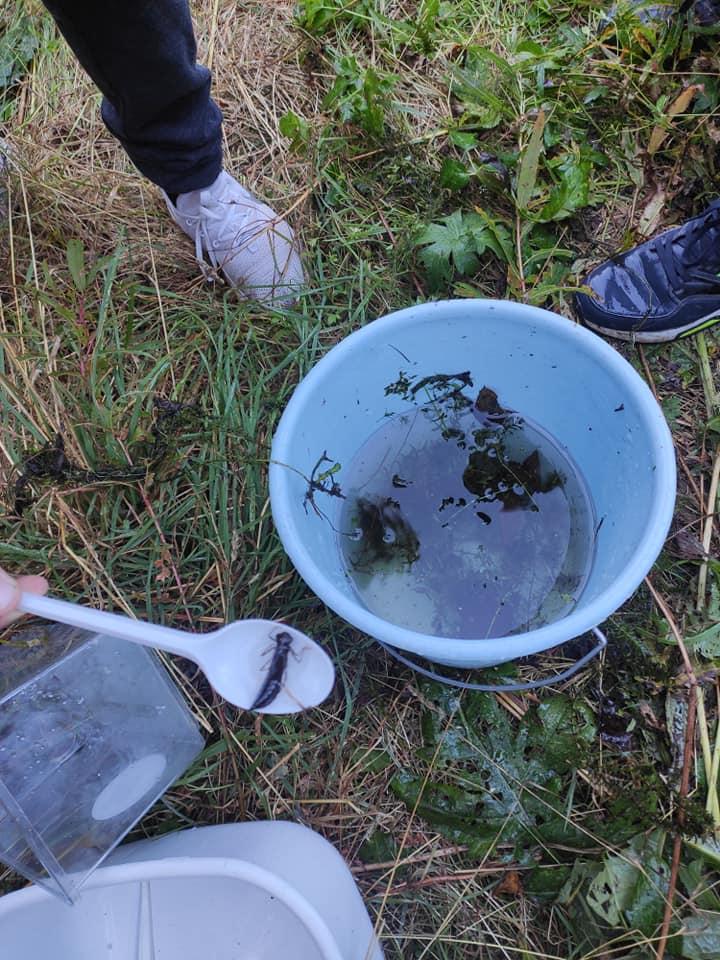 5.–6. kl VVV SA õppeprogrammil Tunne vee-elustikku